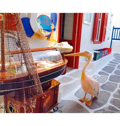 Επαγγελματικός εξοπλισμός ΒΑΡΑΝΑΚΗΣ - Επαγγελματικές βιτρίνες ψαριέρες, Ψυγείο εκθετήριο βάρκα Canelli Mare